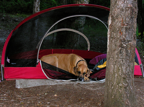 5 Tips for Camping Green With Your Dog