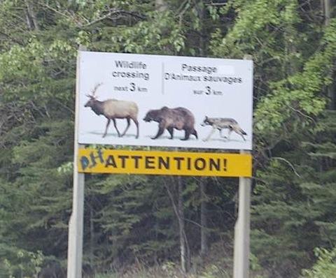 Alaska Elk, Bear, Coyote, Oh My!