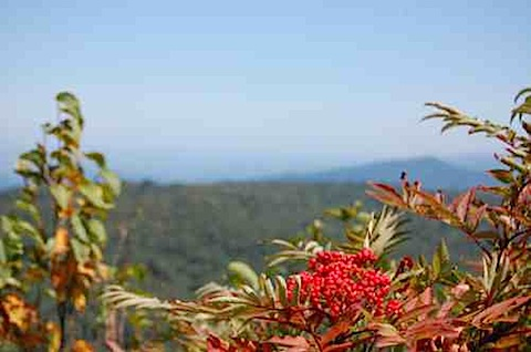 Shenandoah National Park Berries