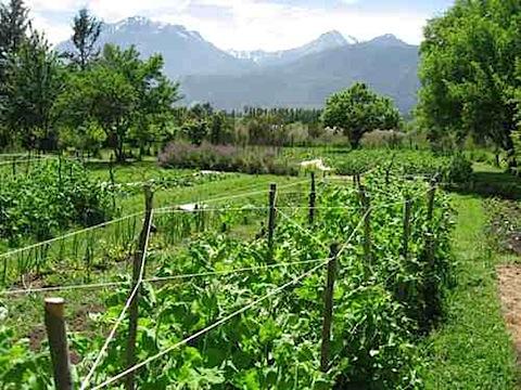 Garden at Chacra Millalen