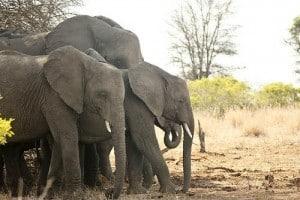 green safari adventure in Africa