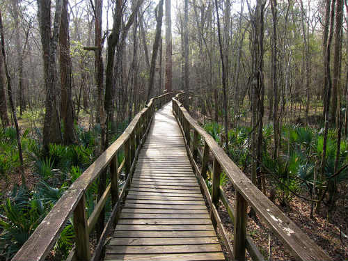 Park boardwalk