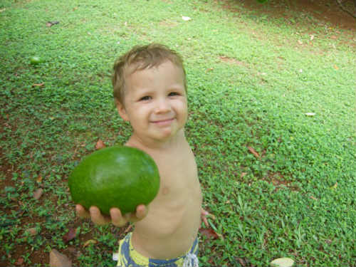small boy holding a green fruit
