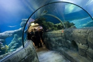 Kids in London will Love the London Aquarium