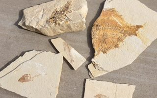 Going on a Fossil Safari in Wyoming ~ Find Fish Fossils Galore