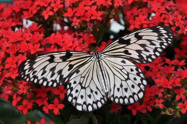 Amazing Trips for Butterfly Watching Enthusiasts