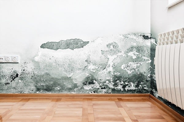 How to Deal With Mold Infestation in your Airbnb Rental, Mold and moisture buildup on wall of a modern house