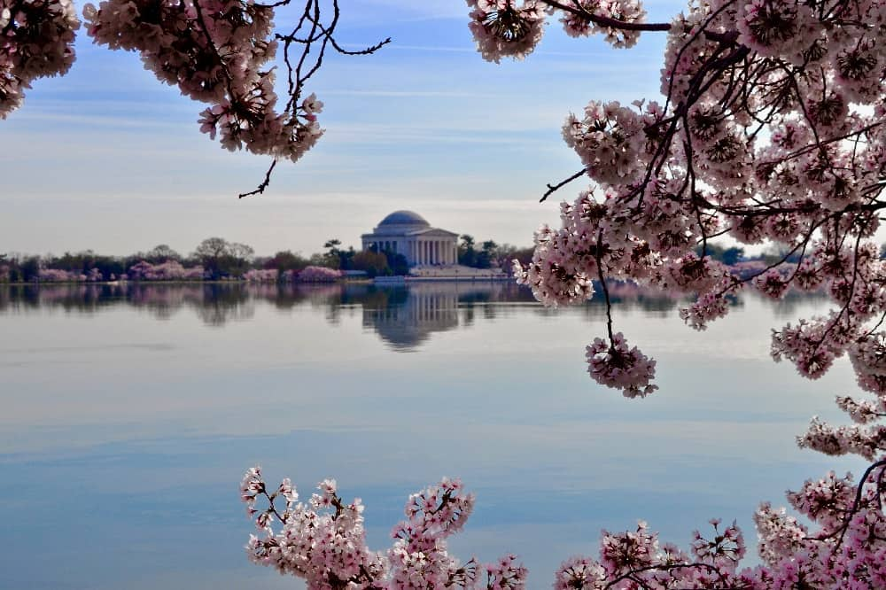 Washington DC view and Cherry Blossom